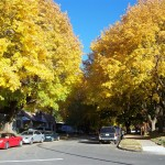 Fall in downtown Coeur d'Alene!